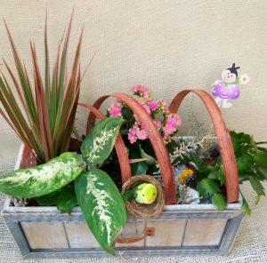 Centro de plantas en cajón de madera