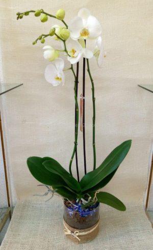 Orquídea en base de cristal