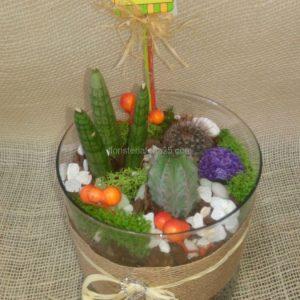 Terrario de cactus