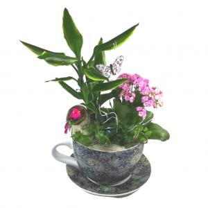 Taza de plantas