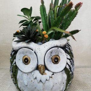 Búho con cactus artificiales