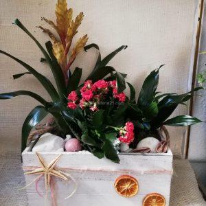 Caja Blanca con plantas