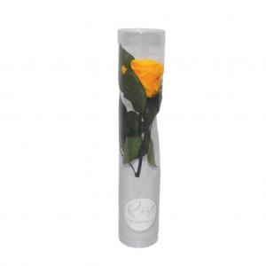 Rosa preservada en caja - Amarillo