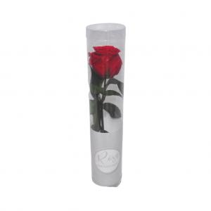 Rosa preservada en caja - Rojo