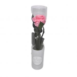Rosa preservada en caja - Rosa Palo
