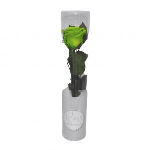 Rosa preservada en caja - Verde