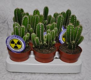Cactus para ordenador