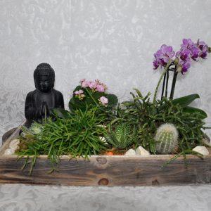 Terrario de Buda