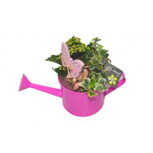 Regadera de plástico rosa con plantas