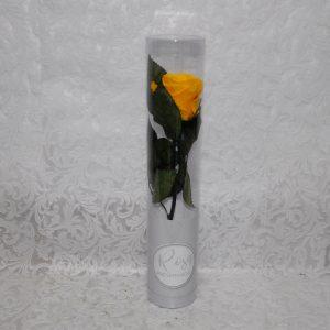 Rosa preservada color amarillo