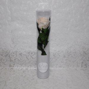 Rosa preservada color beige