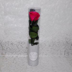 Rosa preservada color fucsia
