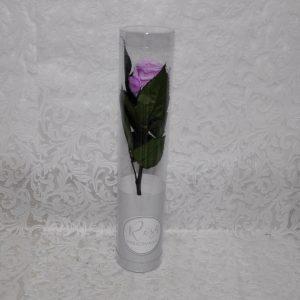Rosa preservada color malva