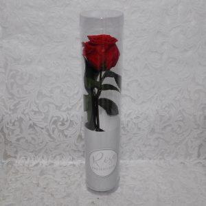 Rosa preservada color rojo