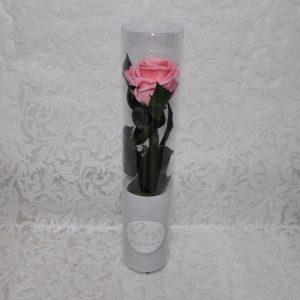 Rosa preservada color rosa palo