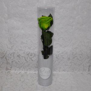 Rosa preservada color verde
