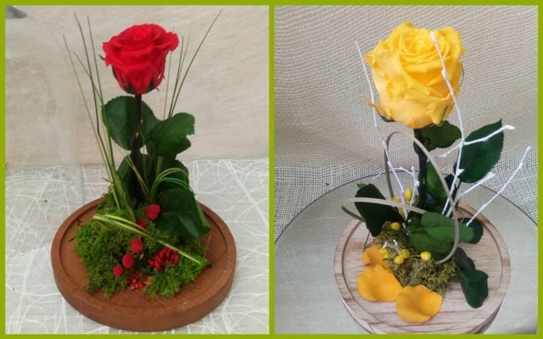 ¿Qué son las rosas preservadas?