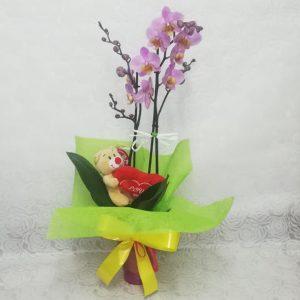 Orquídea rosa con peluche