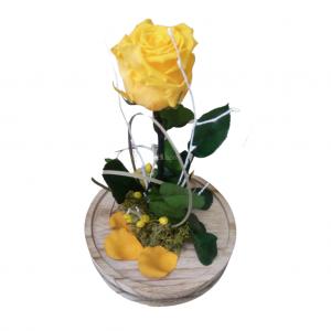 Rosa de la Bella y la Bestia amarilla