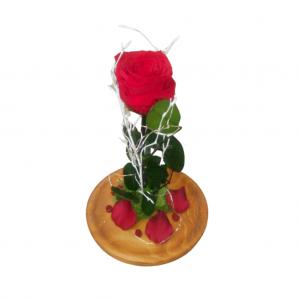Rosa de la Bella y la Bestia roja
