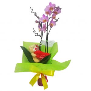 Orquídea en planta con peluche