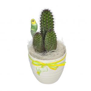 Cactus con macetero