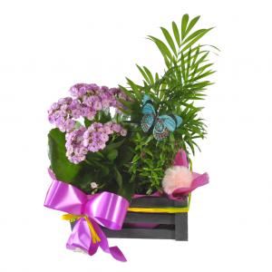 Caja de plantas con Kalanchoes
